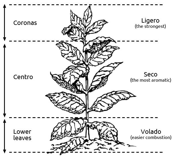 kolumbus-plant