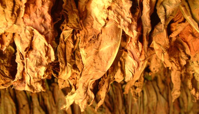 kolumbus-drying