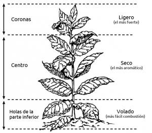 kolumbus-planta